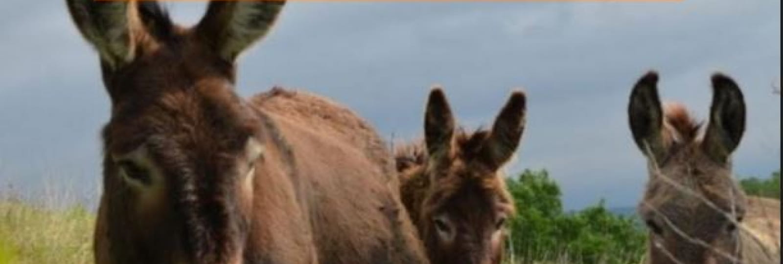 Balade contée avec les ânes