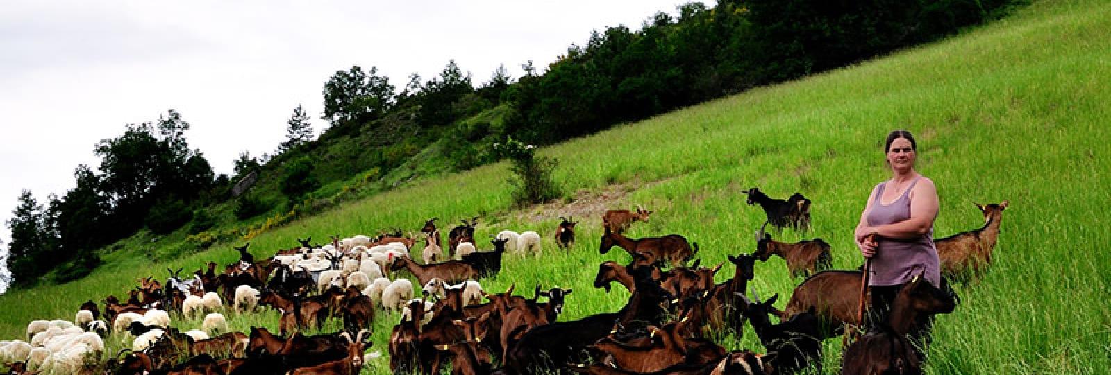 Ferme du Villard (farm)