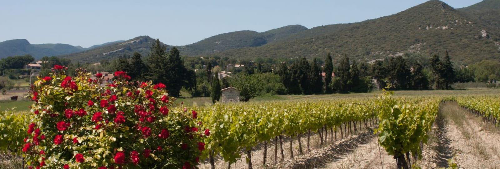 Les Vignerons de Valléon - Caveau de St Gervais sur Roubion
