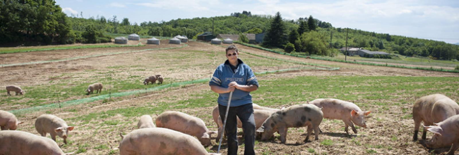 Vincent et les cochons de la ferme des ayasses