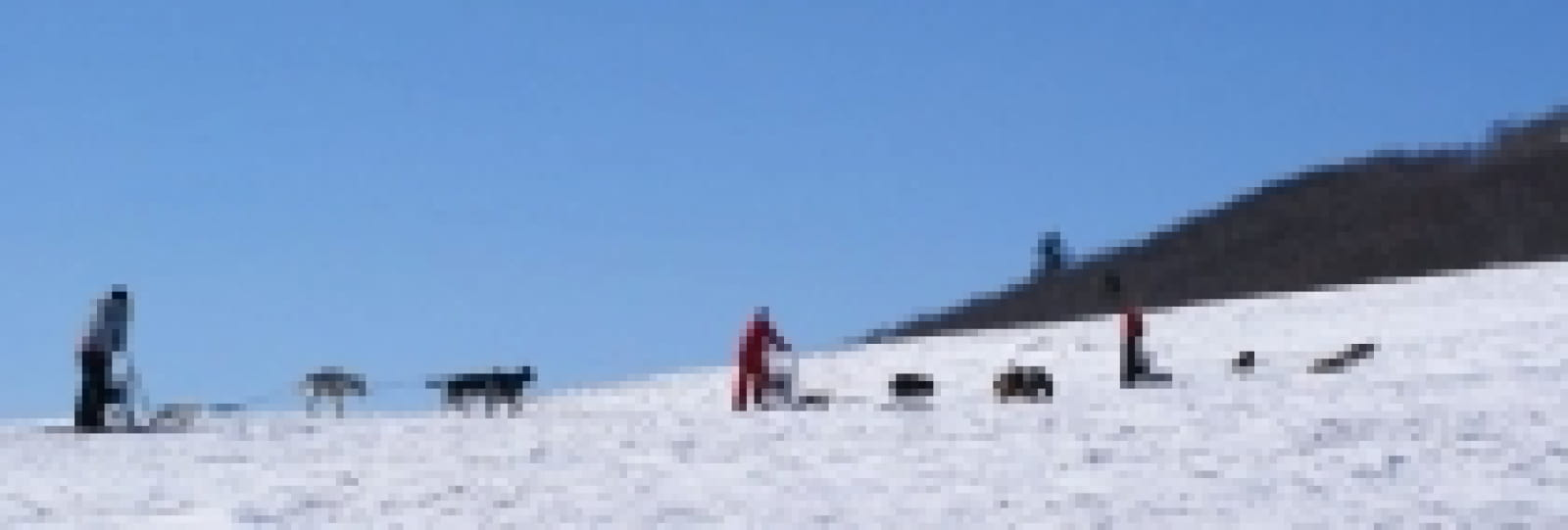 Ski-joëring avec 'Chiens de traineau Vercors'