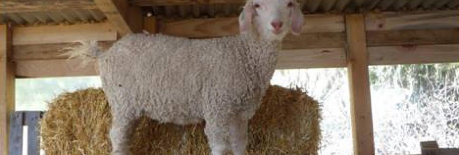 Atelier - filage, tissage, feutrage, teintures naturelles ou tricotage de la laine