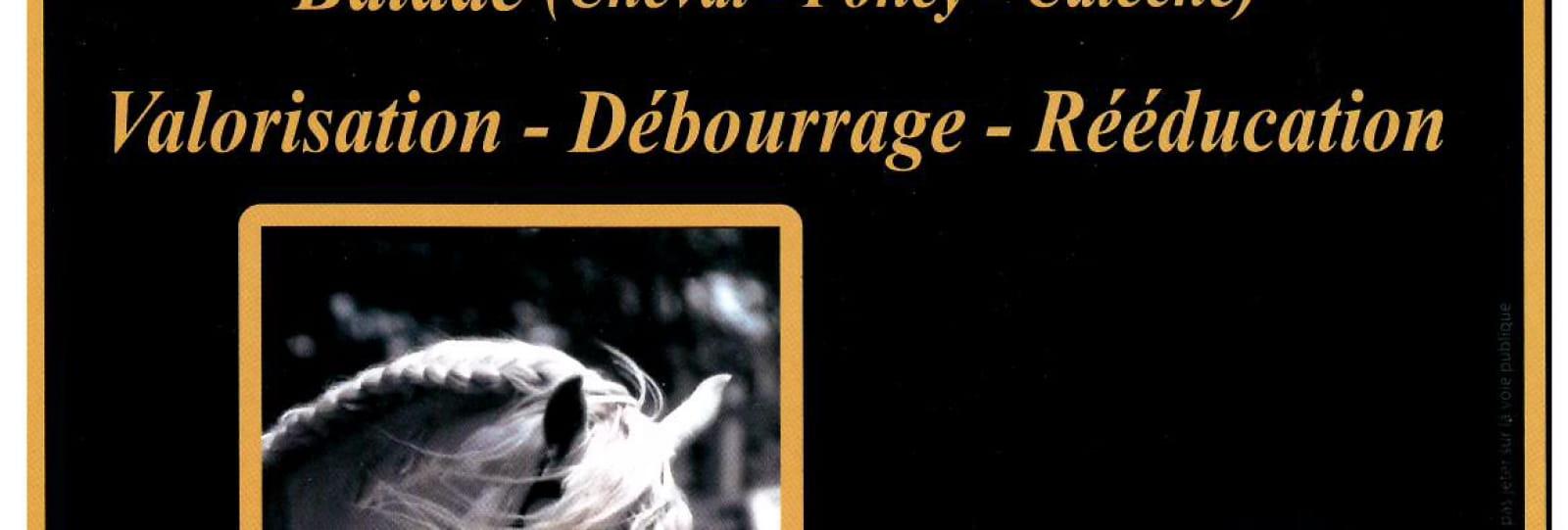 Elevage Peyron-Centre Equestre