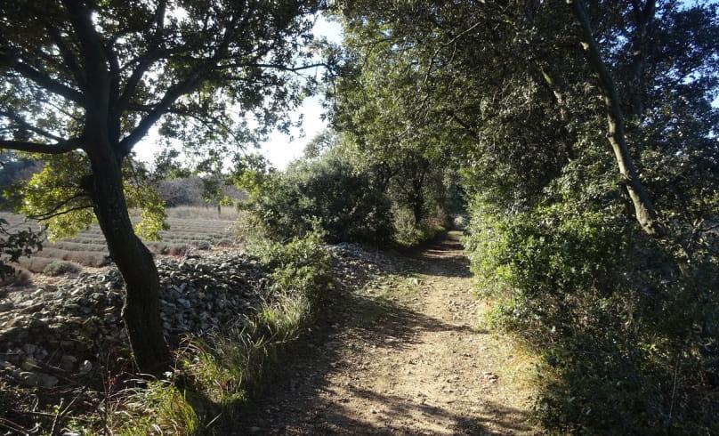 Entre Bois et Ravins
