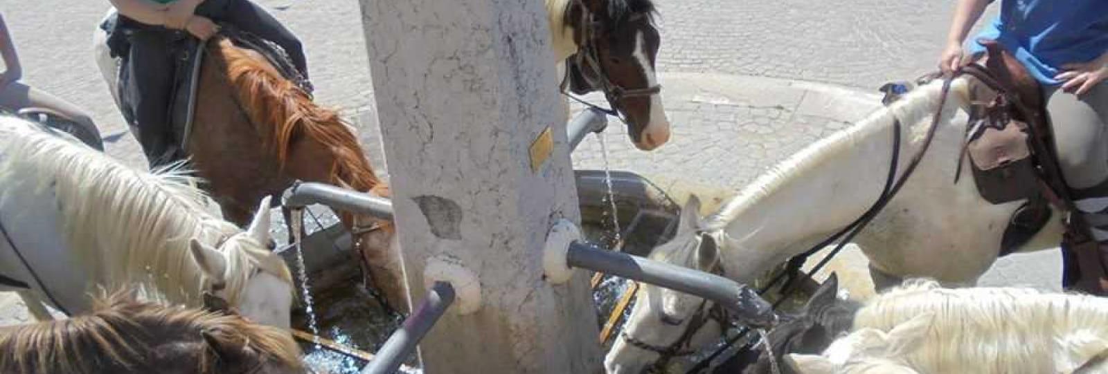 Sensations Equestres