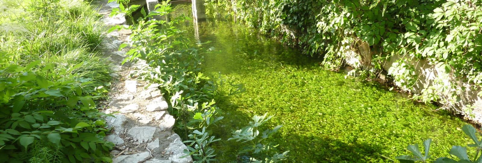 Canal des Moulins