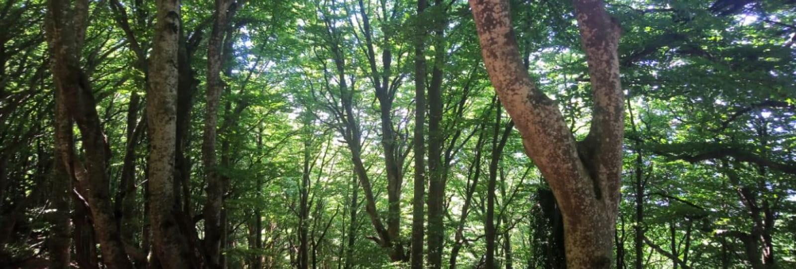 Bains de forêt ou Shinrin-yoku