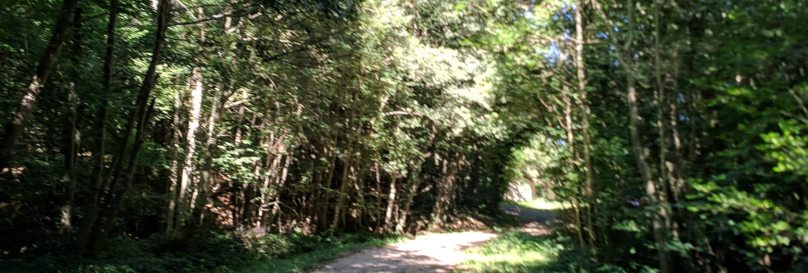 Forêt de Thivolet