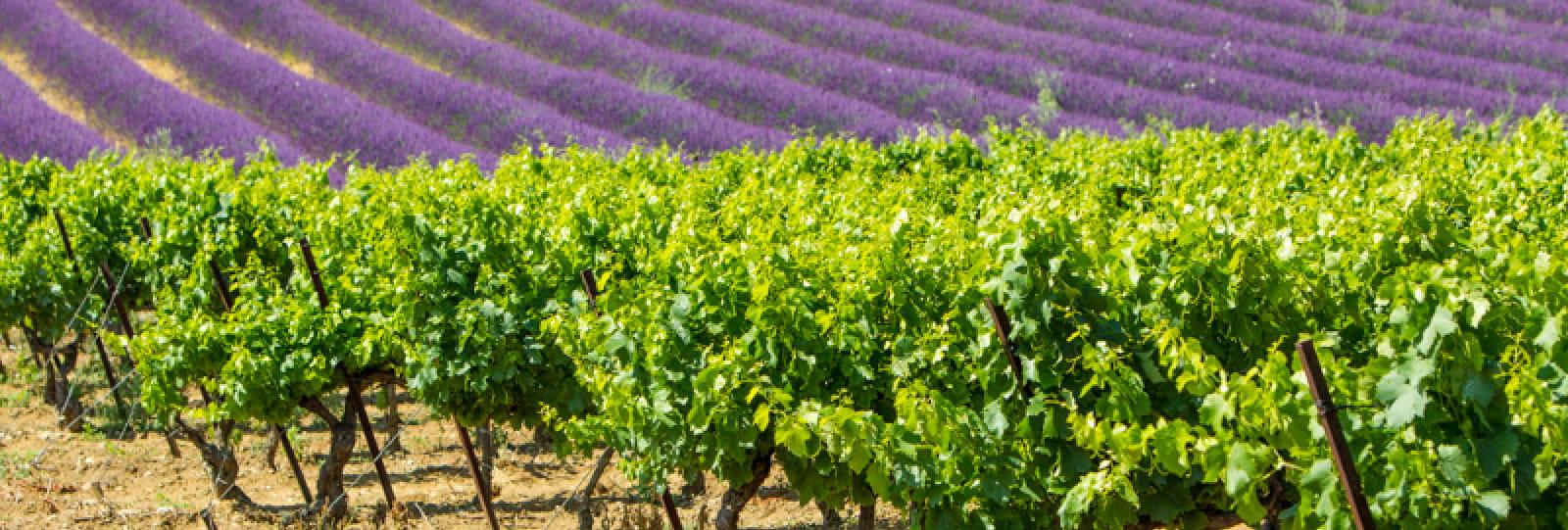 Séjour Aux Portes de Provence (3 jours / 2 nuits)