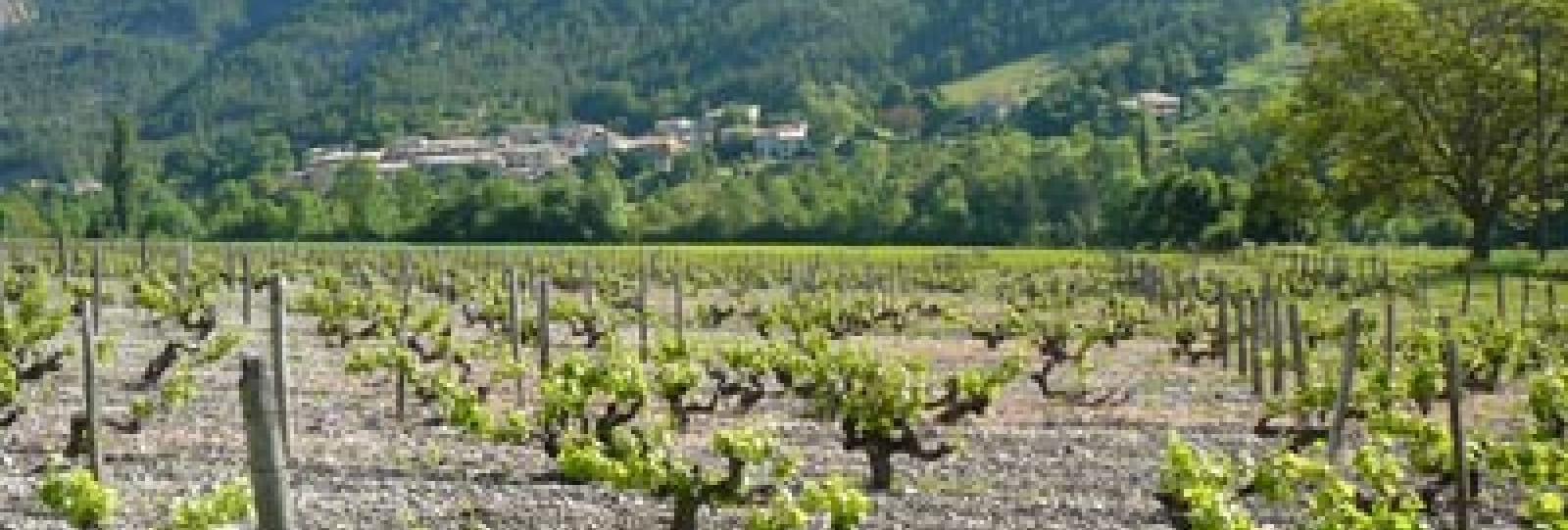 Sur les Chemins de la Clairette - La vallée des Vignes
